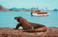 Go Indonesia :: The Uniqueness Of Komodo Island To Admire