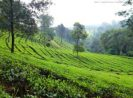 Go Indonesia :: Experience The Beautiful Gunung Mas Agro Tourism